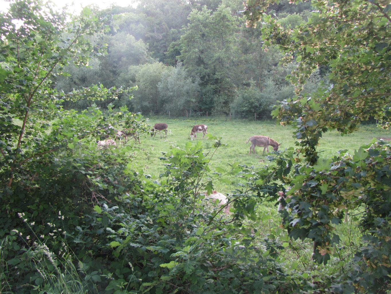 Tiere auf der Wiese am Ruruferradweg