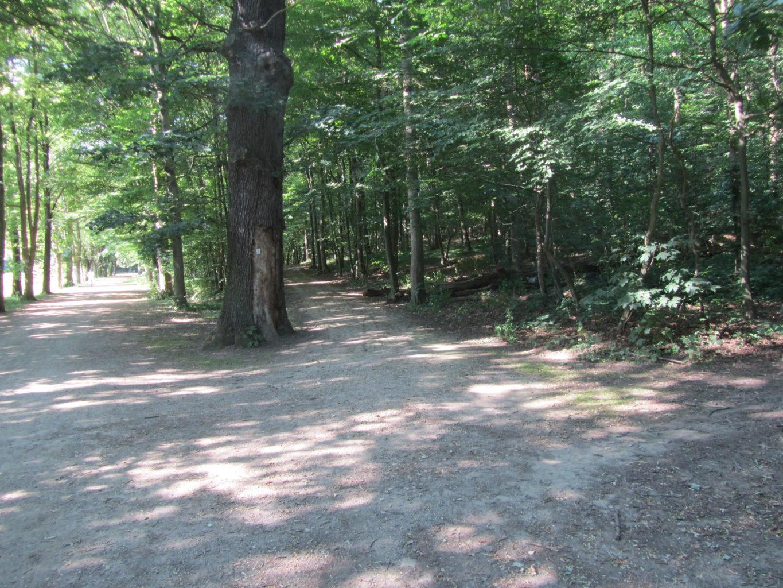 Wege im Burgauer Wald