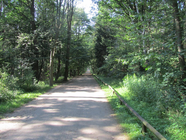 Burgauer Wald zwischen Niederau und Düren