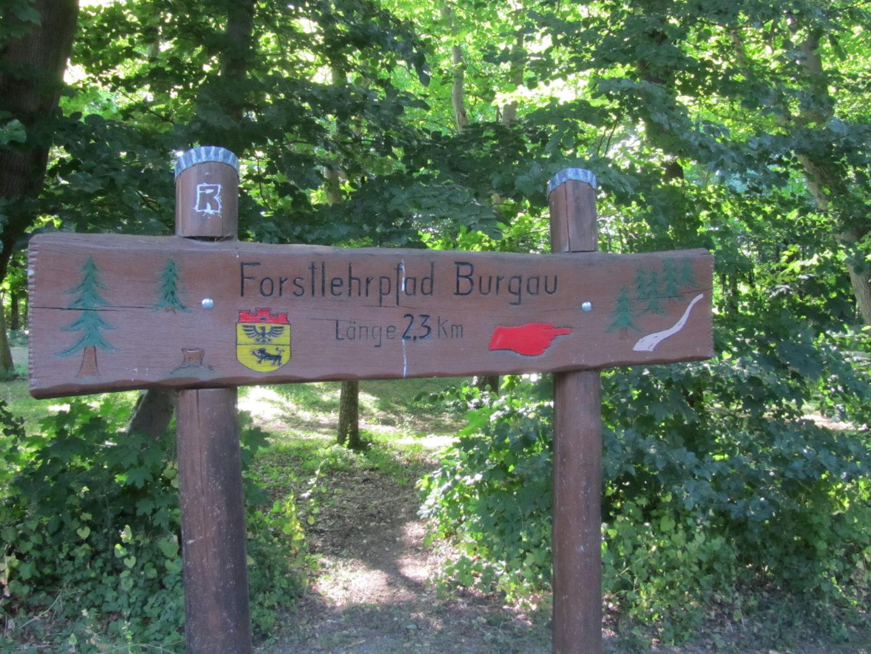 Schild zum Forstlehrpfad Burgauer Wald