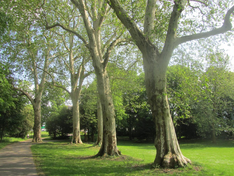 Bäume im Willy-Brandt-Park (Südteil)
